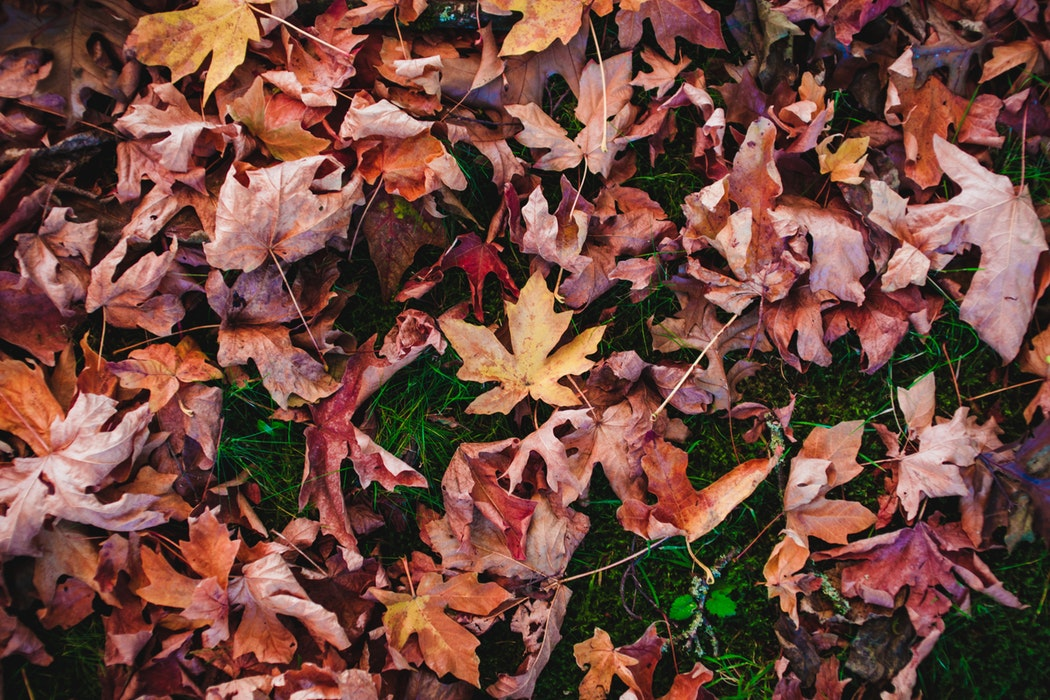 FIVE CHANGES WE CAN TAKE INTO AUTUMN - Emma Mumford