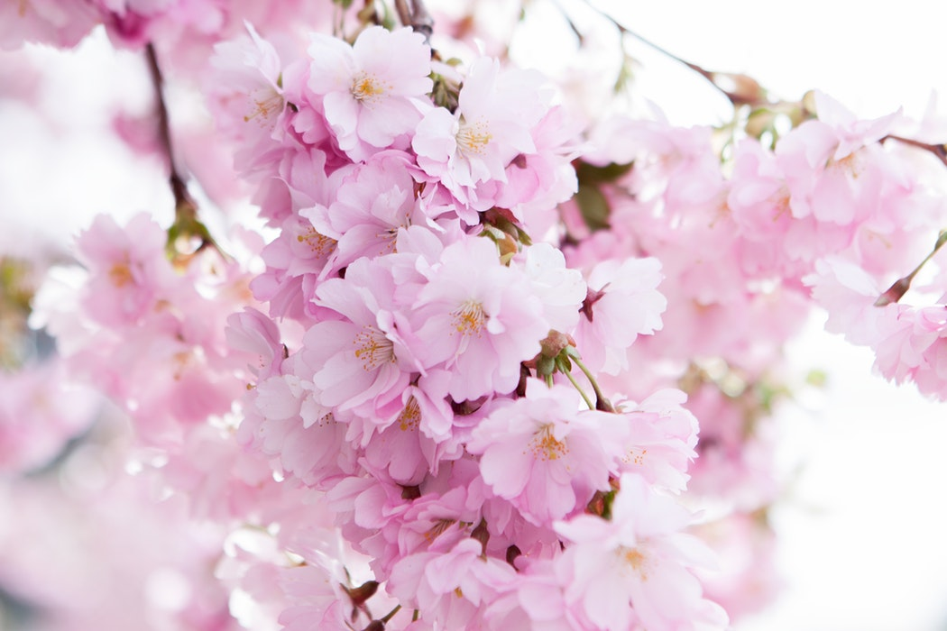 HOW TO MANIFEST THIS SPRING
